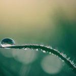 Tecniche di fertirrigazione in agricoltura