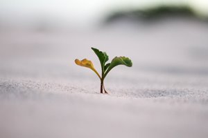 Maggiore resistenza delle piante a stress ambientali e climatici
